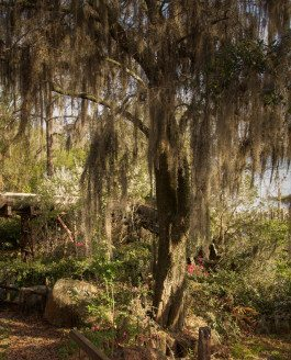 Creepy Images of Abandoned Disney World is a Real-Life Dismal Land